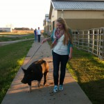 FFA Student Lauren Jones tends to her pig, Pierre, twice a day, which includes feeding, walking, washing and brushing in preparation for the Katy ISD FFA Livestock Show & Rodeo.